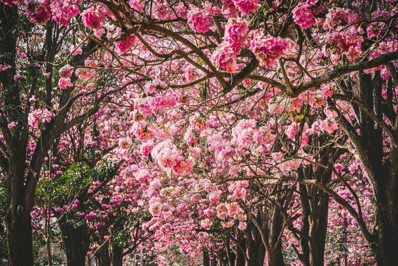 桃红色花或樱花和树 库存图片