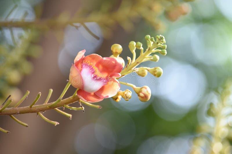 桃红色花是在被弄脏的背景的花束 免版税图库摄影