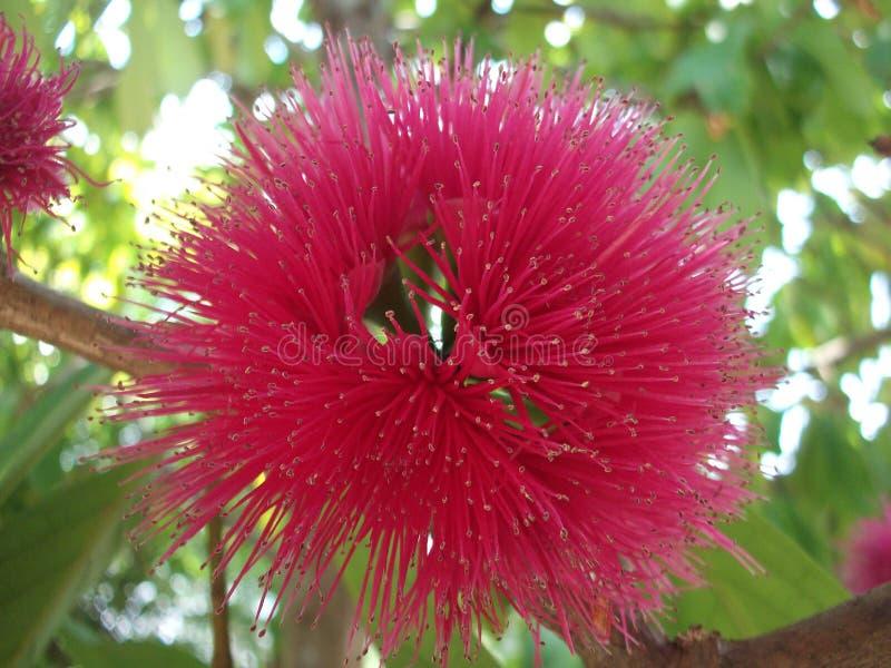桃红色花有绿色背景 库存照片