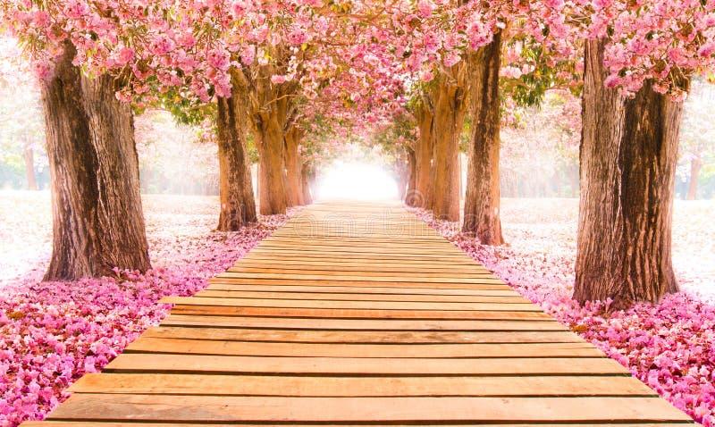 桃红色花树浪漫隧道  库存照片