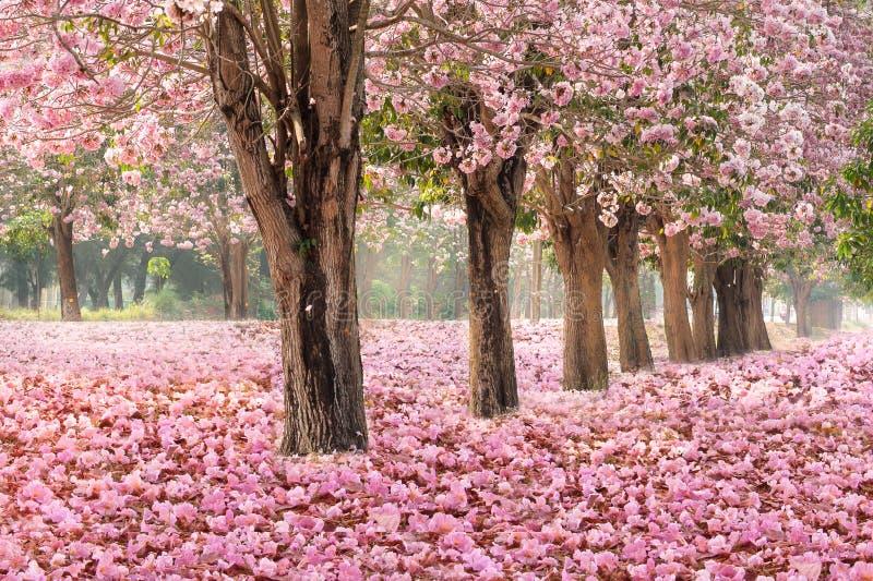 桃红色花树浪漫隧道  库存图片