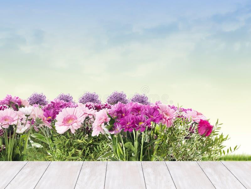 桃红色花花床在庭院的大阳台的 库存照片