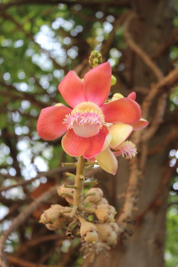 桃红色花 在自然背景的桃红色花 库存图片