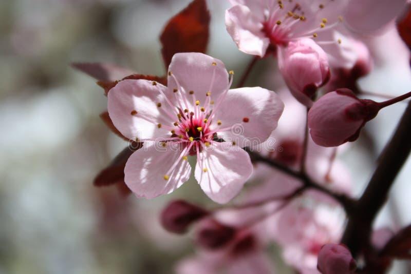 桃红色花 免版税图库摄影