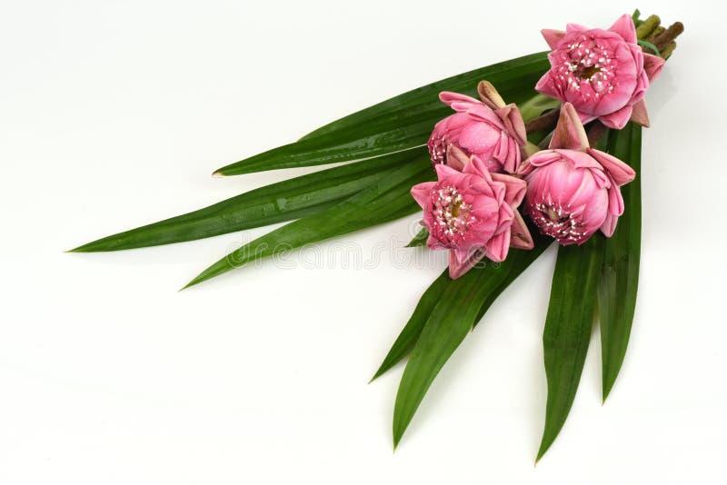 桃红色莲花花束在白色背景的 免版税库存照片