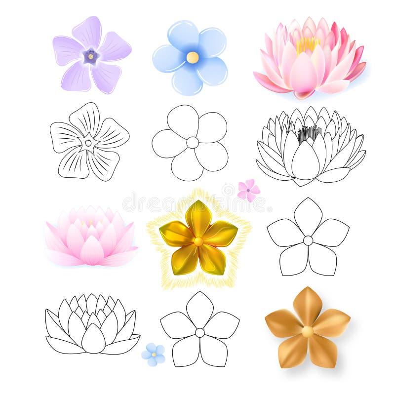 桃红色莲花,荔枝螺,勿忘草样式花集合 皇族释放例证
