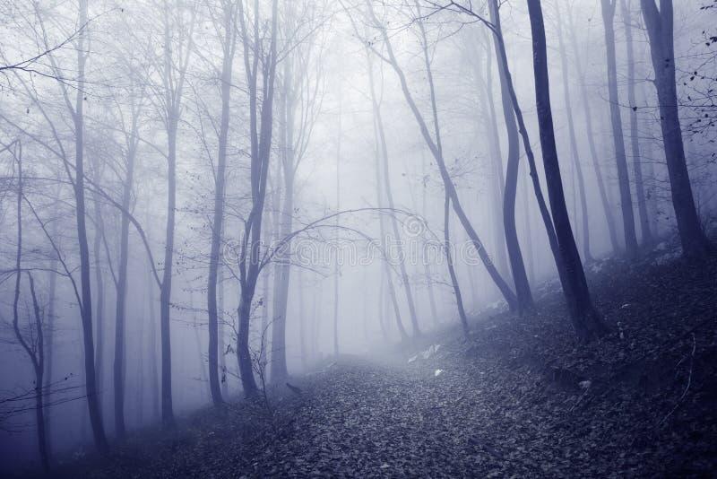 桃红色蓝色色的有雾的森林道路 免版税图库摄影