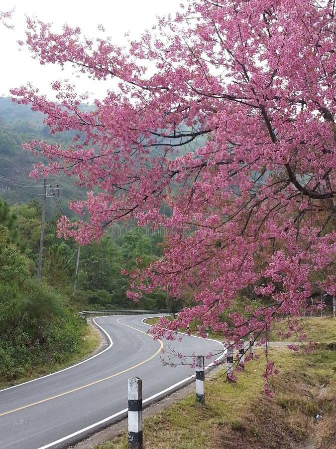 桃红色路 库存图片