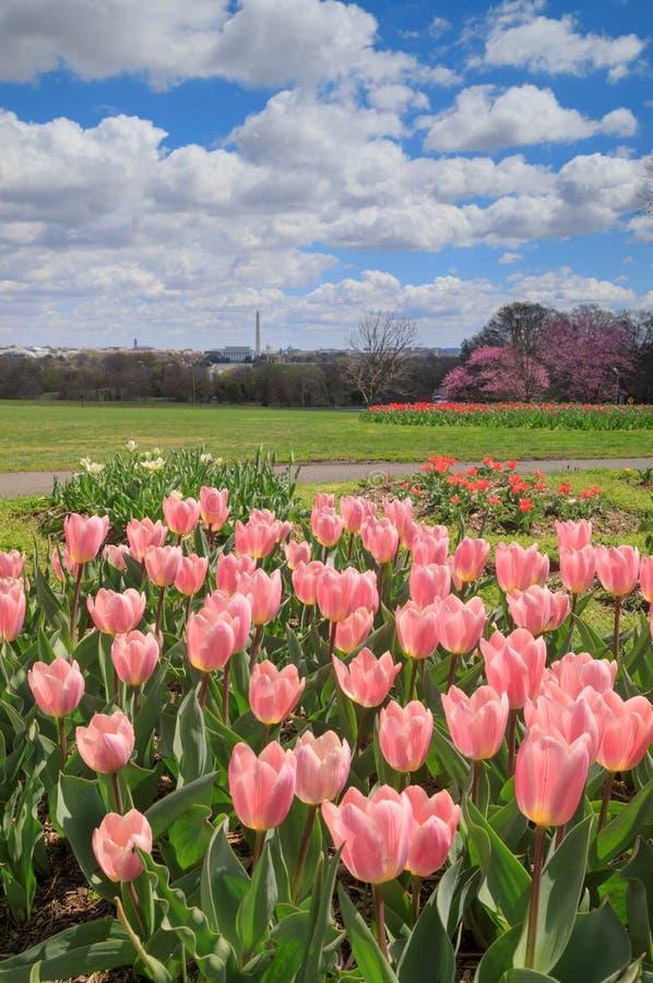 桃红色郁金香华盛顿特区阿灵顿里奇公园垂直 免版税库存照片