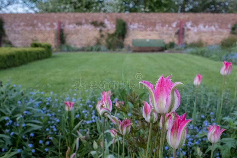 桃红色郁金香和各种各样的春天花在Eastcote安置庭院,英国,历史的被围住的庭院 免版税库存图片