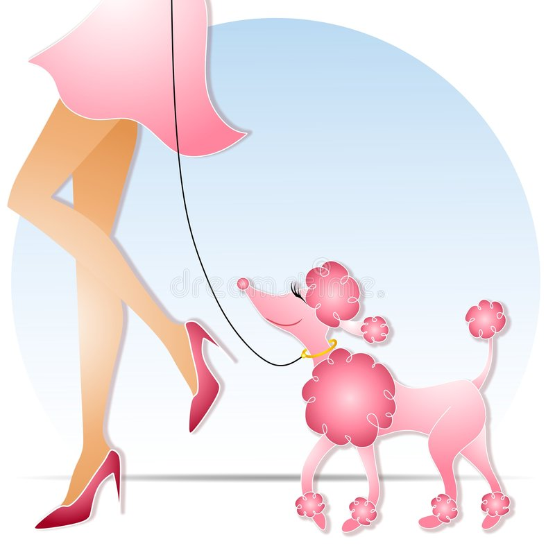 桃红色长卷毛狗走的妇女
