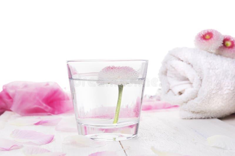桃红色雏菊在杯开花水和滚动的白色毛巾 免版税图库摄影