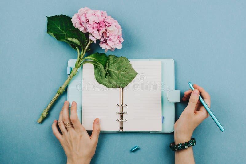 桃红色霍滕西亚花、蓝色笔记本和妇女的手Flatlay  免版税库存图片