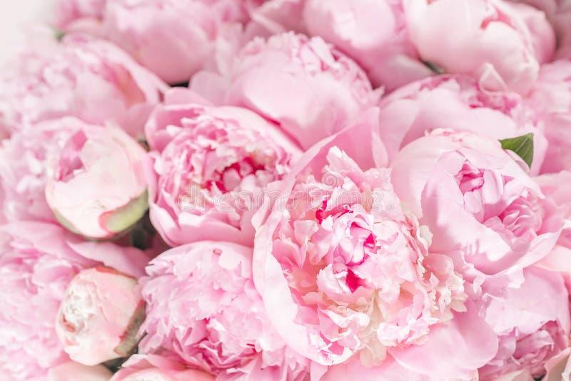 桃红色颜色关闭很多牡丹典雅的花束  美丽的花为任何假日 许多相当和 免版税库存图片