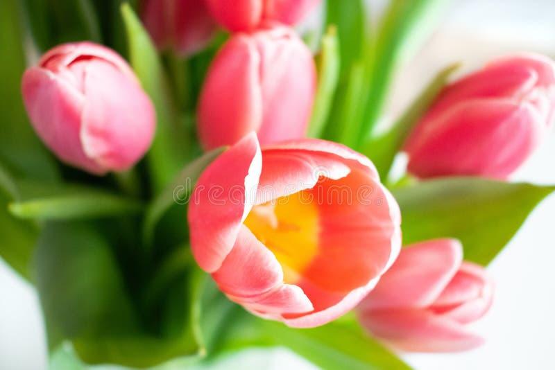 桃红色,红色郁金香花束与 o 库存照片