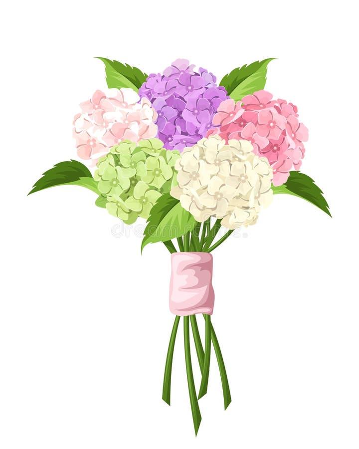 桃红色,紫色,绿色和白色八仙花属花束开花 也corel凹道例证向量 皇族释放例证