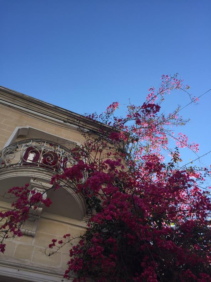 桃红色结构树 库存照片