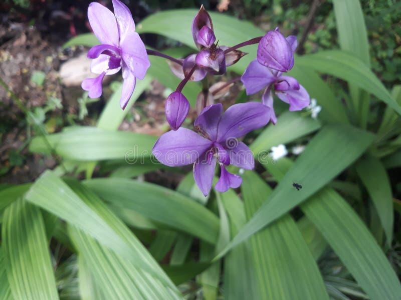 桃红色orkid花 免版税库存图片