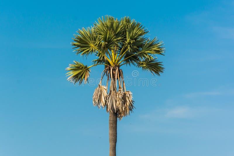 去泰国免筺(_桄榔树风景在泰国
