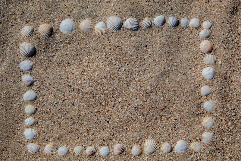 框架在从壳的沙子被计划,不同颜色和形状 库存图片