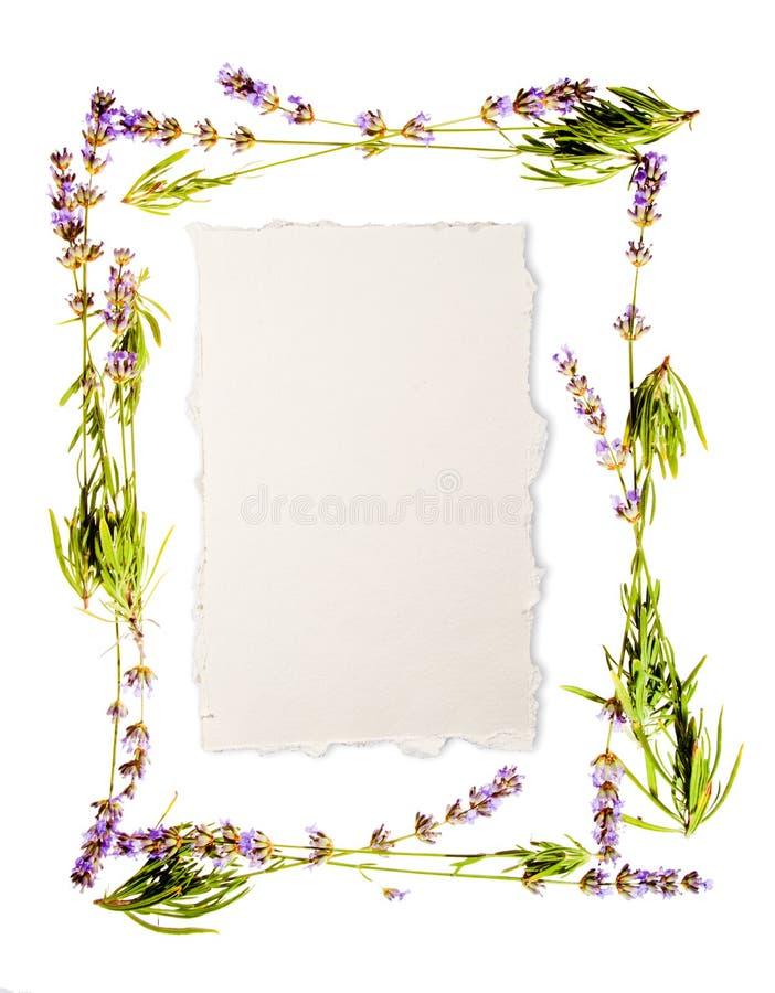 框架查出的淡紫色白色 免版税图库摄影
