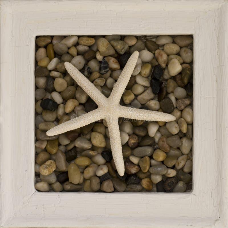 框架海星 库存图片