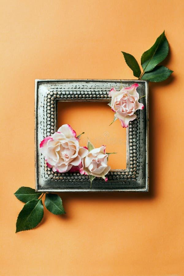 框架照片玫瑰葡萄酒 库存图片