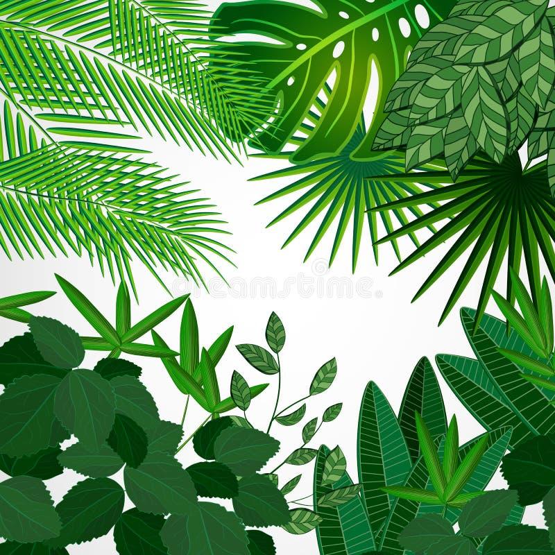 框架由叶子制成在白色背景 密林热带花卉 向量例证