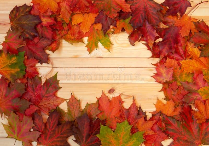 框架由在木背景的秋天枫叶制成 库存图片