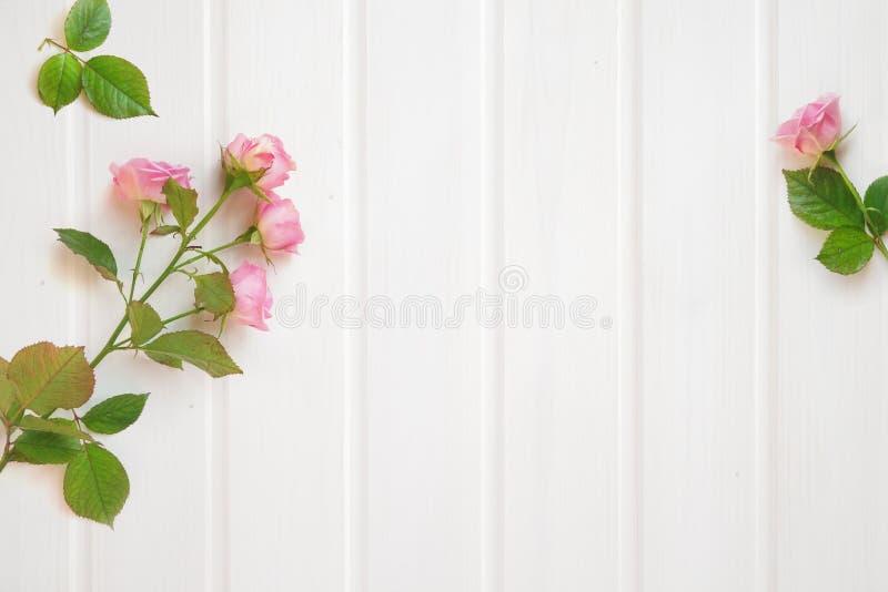 框架由桃红色玫瑰制成在白色木背景- Fla开花 免版税库存照片