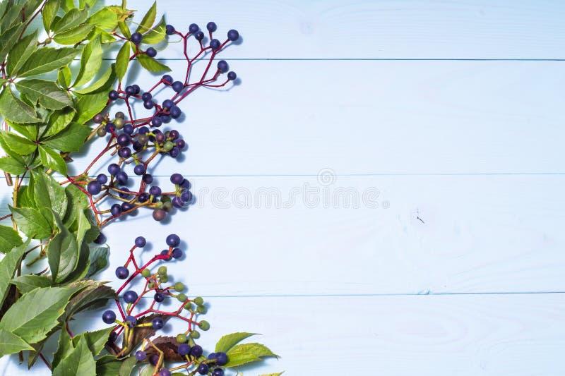 框架由狂放的葡萄制成在蓝色木背景 库存图片