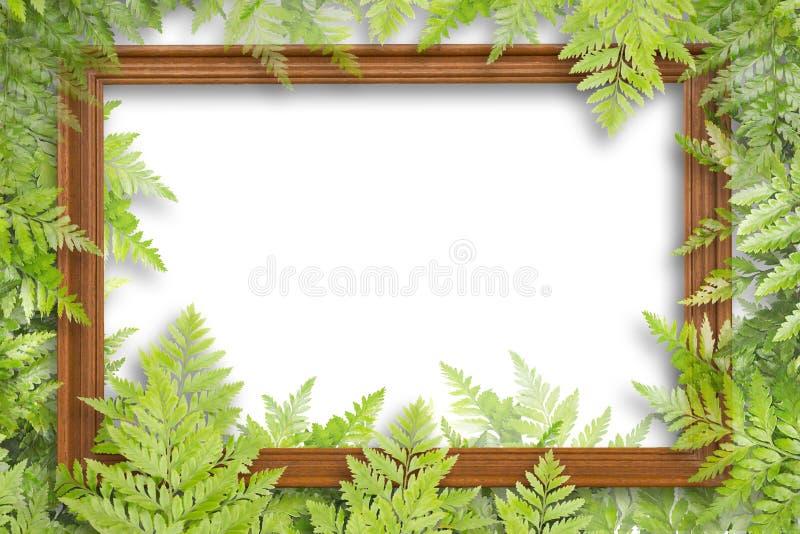 框架的木制框架和绿色叶子在白色背景 免版税库存照片