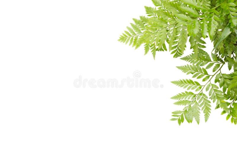 框架的绿色叶子在白色背景,自然边界 免版税库存照片