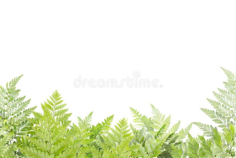 框架的绿色叶子在白色背景,自然边界 免版税库存图片