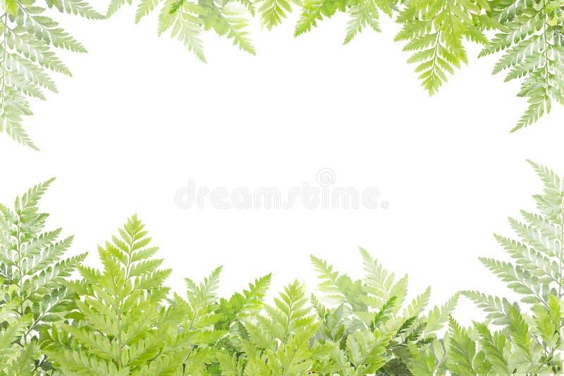 框架的绿色叶子在白色背景,自然边界 库存图片