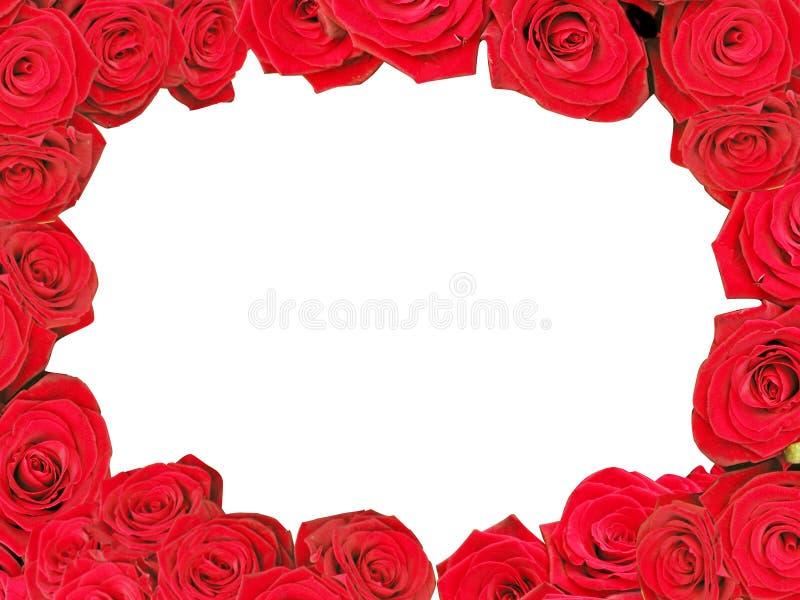 框架红色玫瑰 免版税库存照片