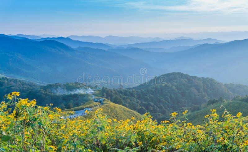 桐树Bua钳子墨西哥向日葵在蓝天下在Maehongson,泰国 库存照片