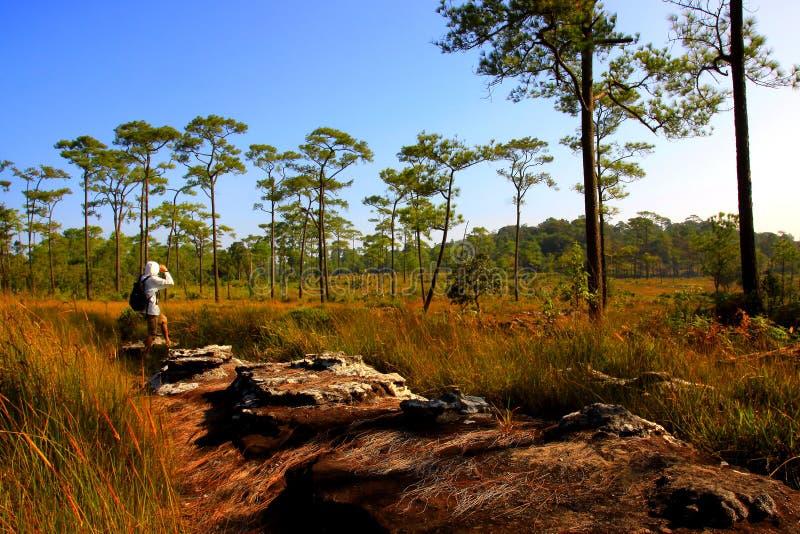桐树salaeng luang国家公园泰国 免版税库存照片