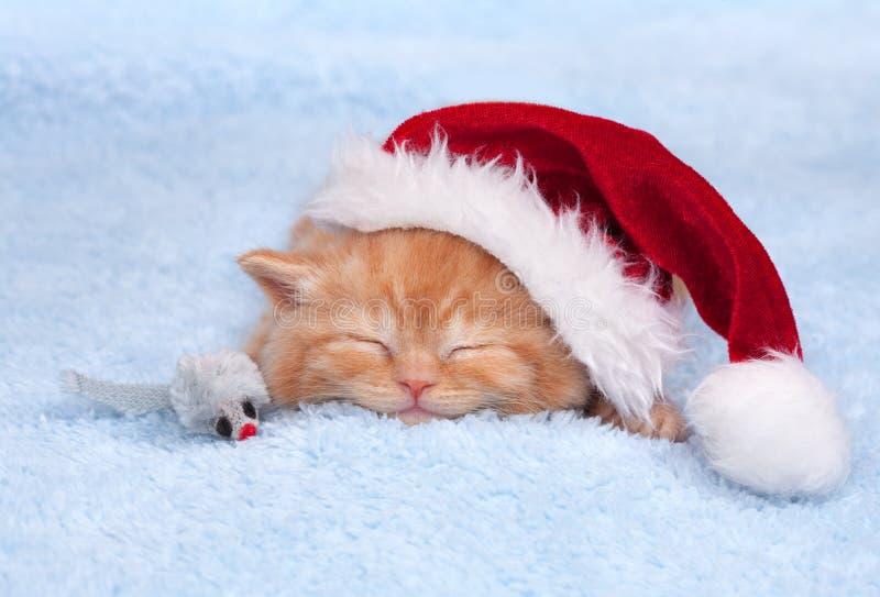 戴桑塔纳的帽子的小的猫 免版税图库摄影