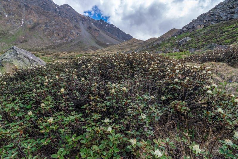 桑格拉谷,喜马偕尔邦,印度/Kinnaur谷风景  免版税图库摄影