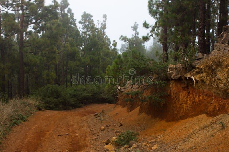 桑迪在木头的乡下公路 开辟在具球果森林红色地面的道路 特内里费岛 免版税图库摄影
