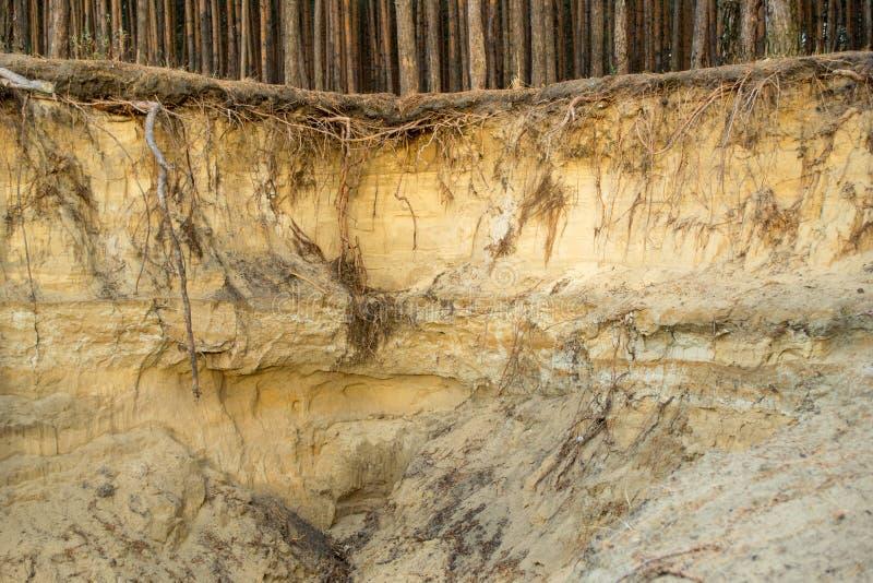 桑迪在松木附近的土壤侵蚀,环境问题 免版税库存图片