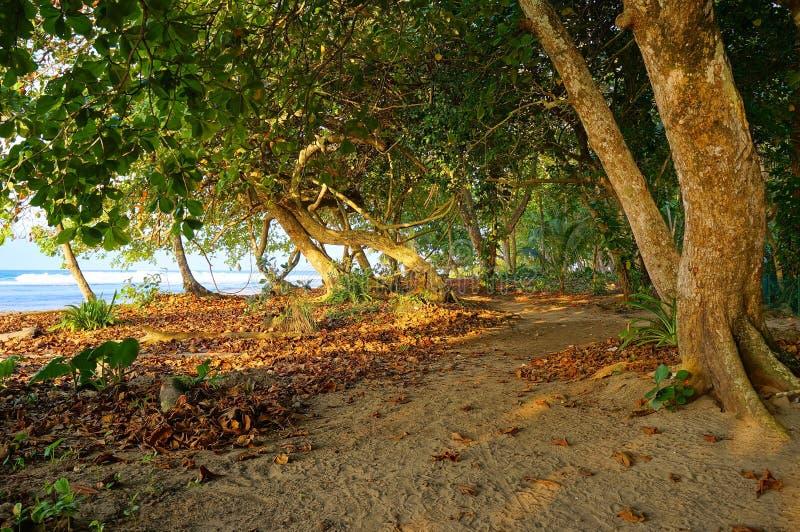 桑迪道路在沿热带海岸的树下 库存图片