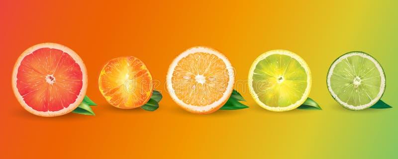 桔子、柠檬、柑橘、普通话、葡萄柚和石灰 向量例证