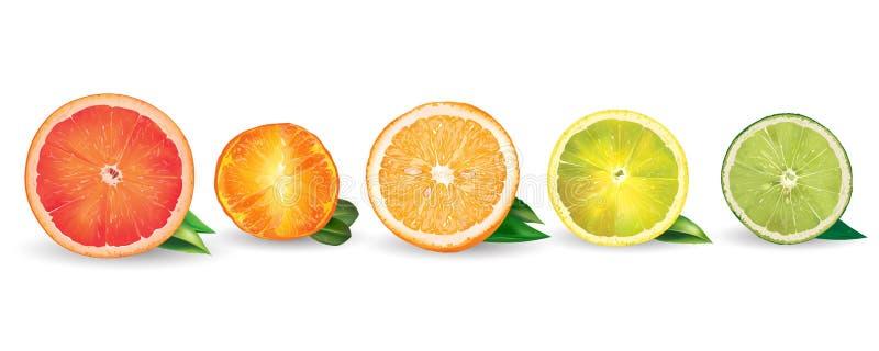 桔子、柠檬、柑橘、普通话、葡萄柚和石灰 库存例证
