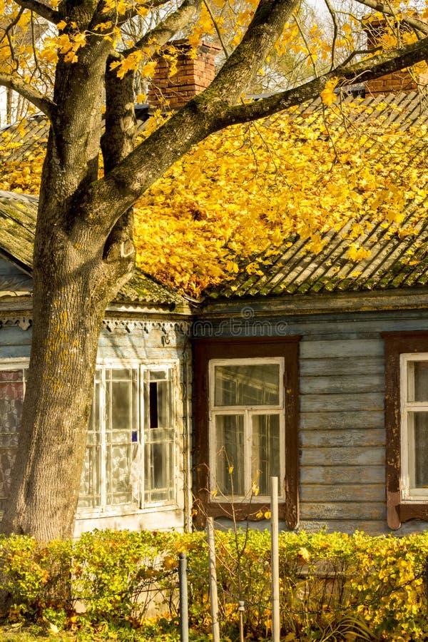 桔子上色在老房子屋顶的树叶子在authumn时间 免版税库存照片