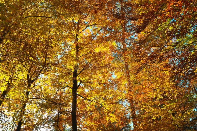 桔子树荫在秋天的森林里 图库摄影