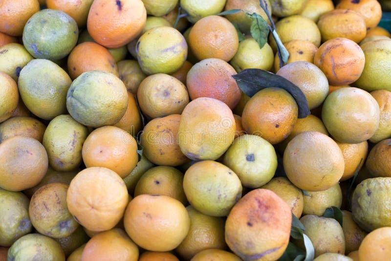 桔子的汇集从西班牙橙色树丛的 图库摄影