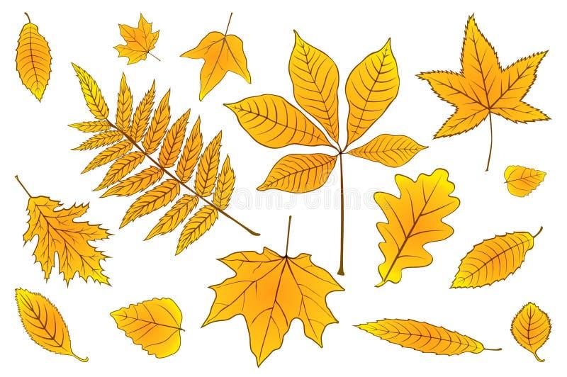 桔子集合秋叶在白色的 r 10 eps 库存例证