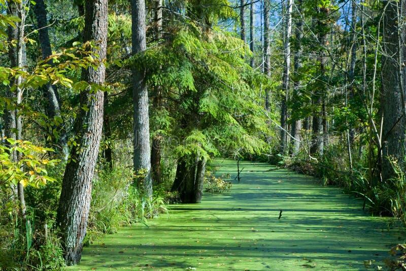 桤木包括浮萍森林河结构树 免版税库存照片